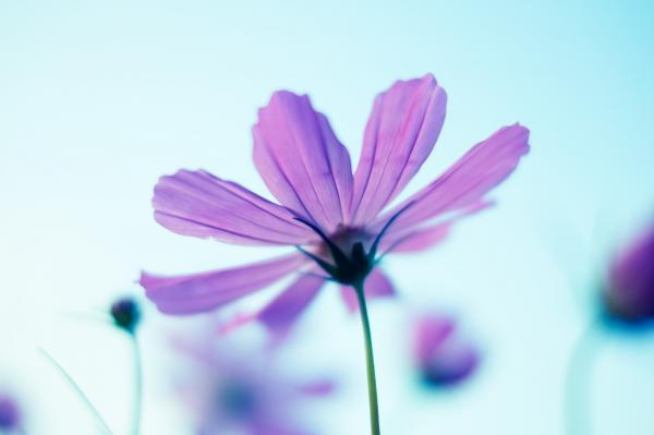 種を蒔かなければ花は咲かない(社長ブログ)